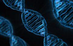 New hobby: gene editing