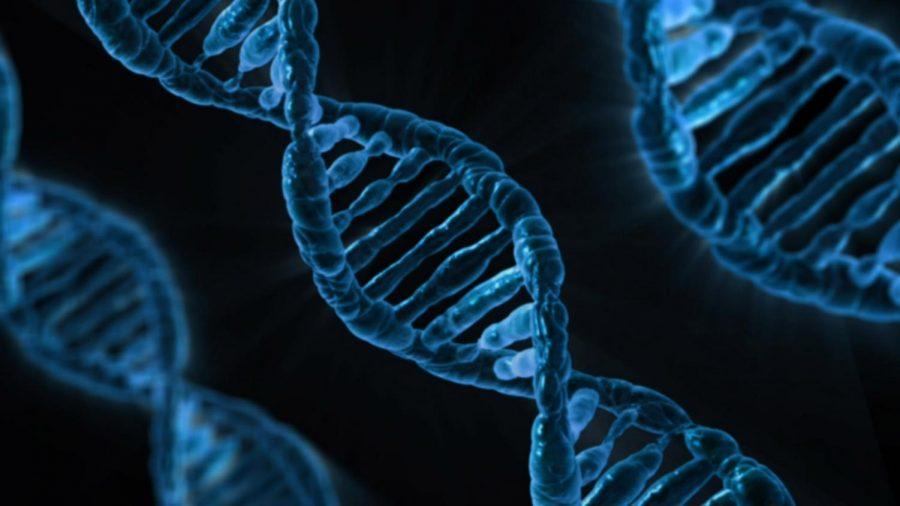 New+hobby%3A+gene+editing