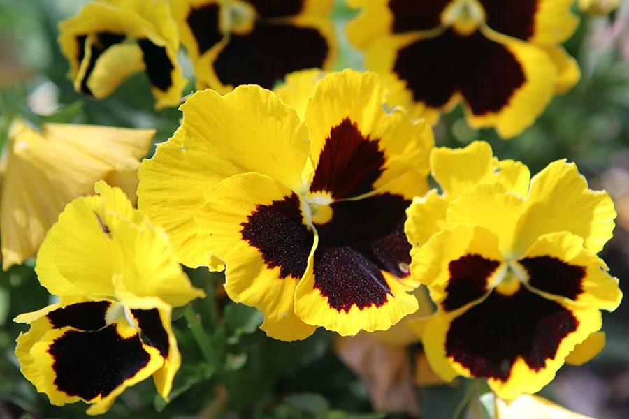 WEEKLY GALLERY: In bloom
