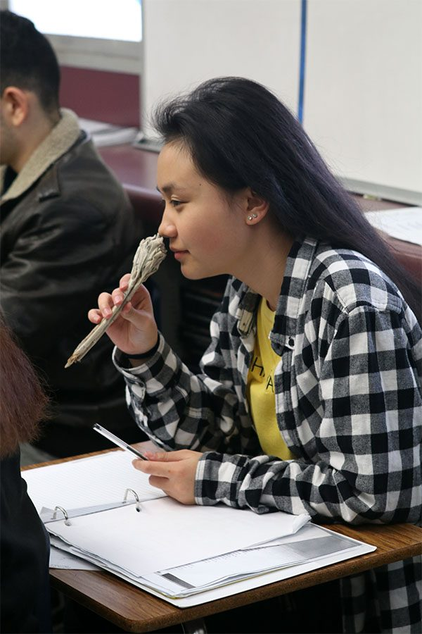 Junior Sophie Thao smells the White Sage. Its traditionally used to safe guard negative energy.