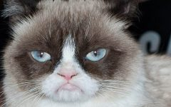 Grumpy Cat passed away